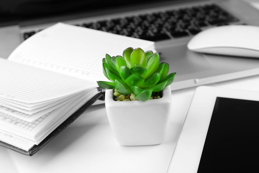 【注目】オフィスに観葉植物を置くメリットとは?おすすめの種類をご紹介