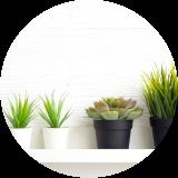 1.観葉植物を置く