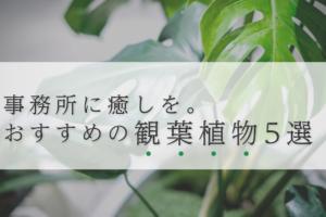 事務所に癒しを。居心地の良さを叶えるおすすめな観葉植物5選
