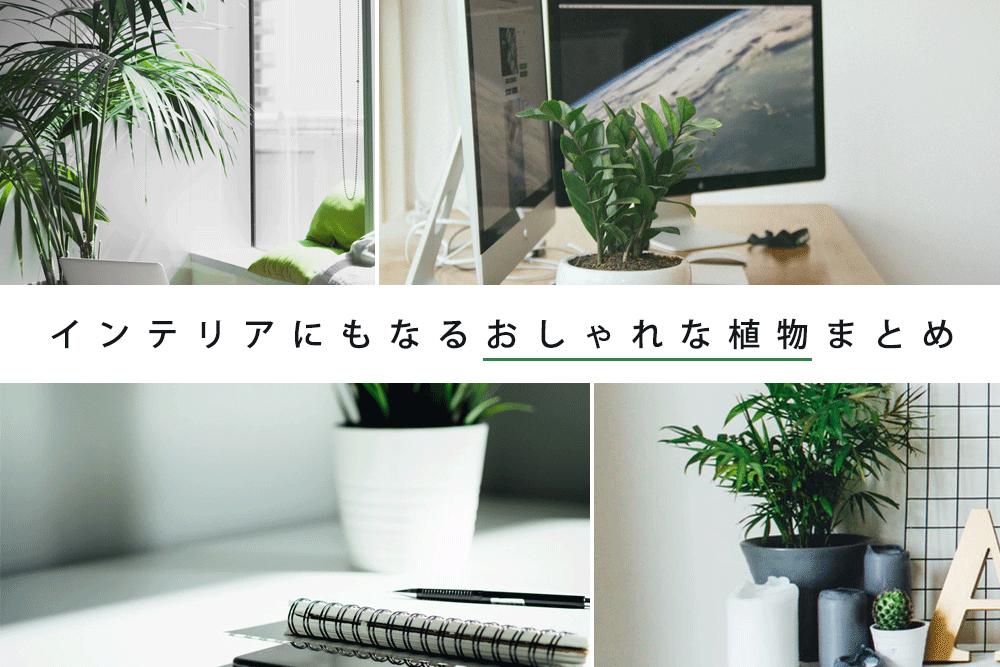 オフィスに1つあるだけで変わる!インテリアにもなるおしゃれな植物まとめ